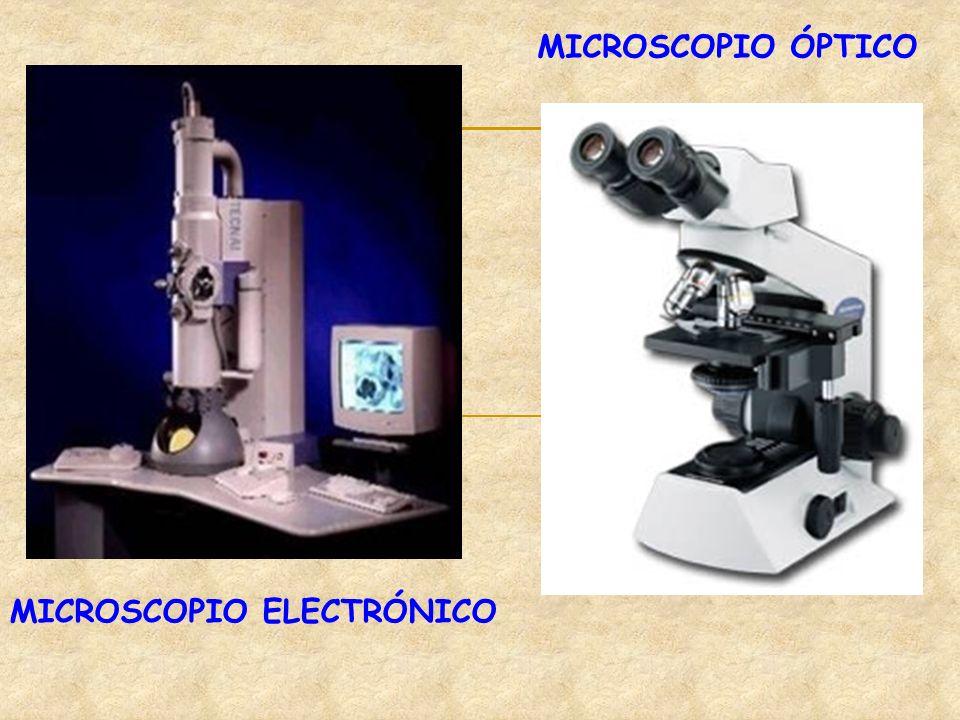 MICROSCOPIO ÓPTICO MICROSCOPIO ELECTRÓNICO