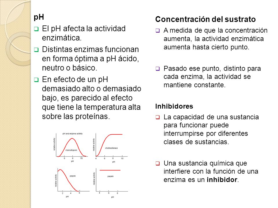 El pH afecta la actividad enzimática.