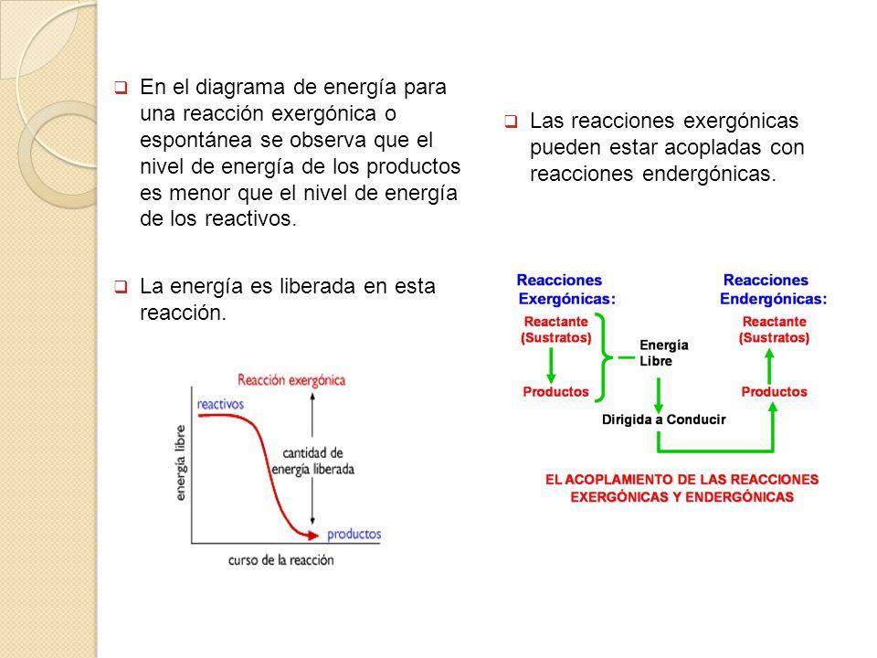 En el diagrama de energía para una reacción exergónica o espontánea se observa que el nivel de energía de los productos es menor que el nivel de energía de los reactivos.