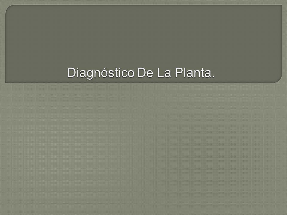 Diagnóstico De La Planta.