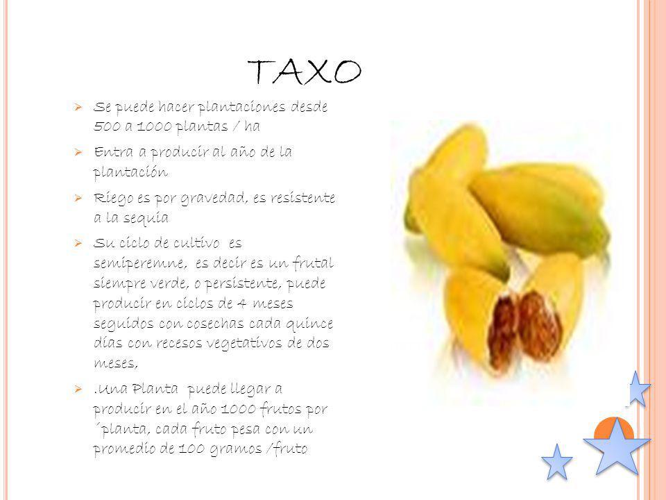 TAXO Se puede hacer plantaciones desde 500 a 1000 plantas / ha