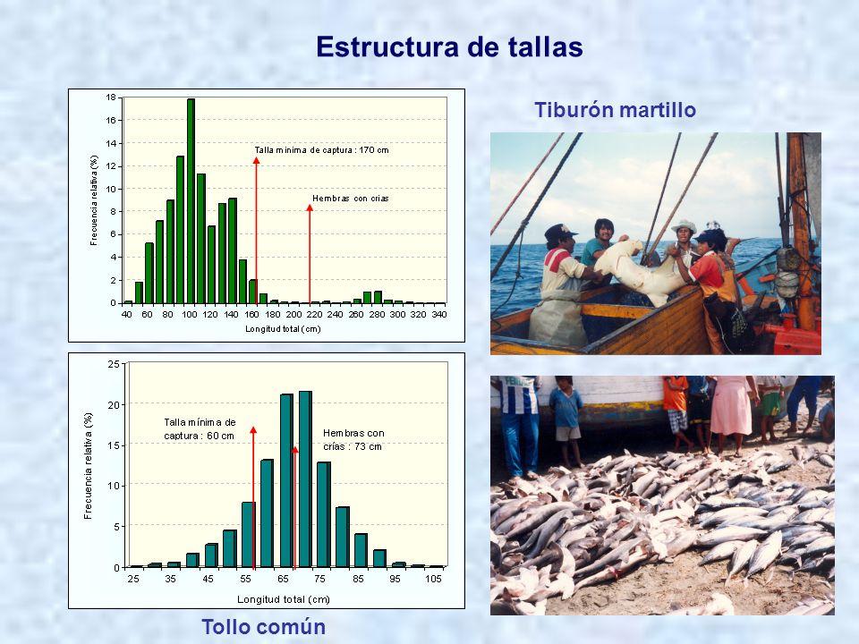 Estructura de tallas Tiburón martillo Tollo común