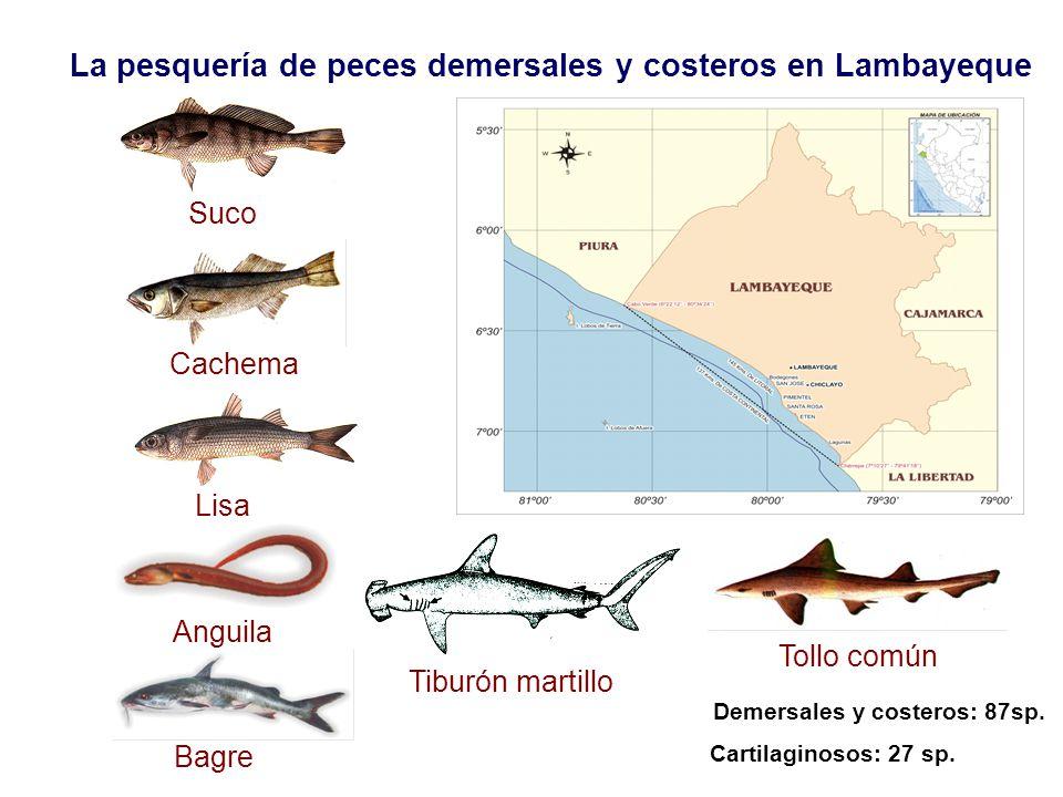 La pesquería de peces demersales y costeros en Lambayeque