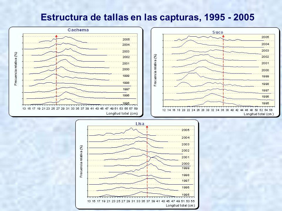 Estructura de tallas en las capturas, 1995 - 2005
