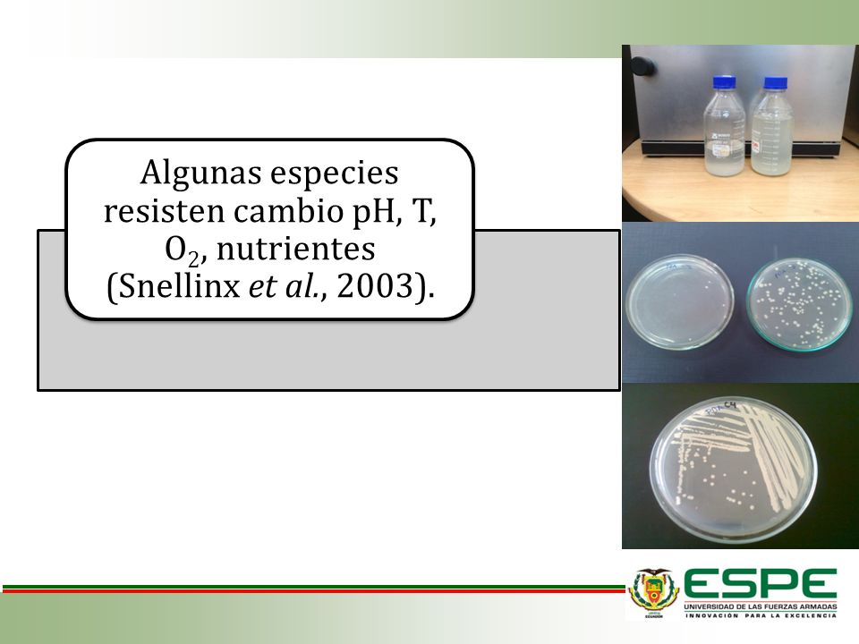 Algunas especies resisten cambio pH, T, O2, nutrientes (Snellinx et al