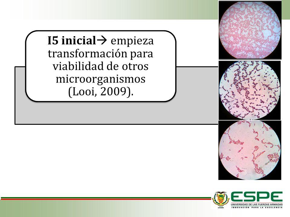 I5 inicial empieza transformación para viabilidad de otros microorganismos (Looi, 2009).