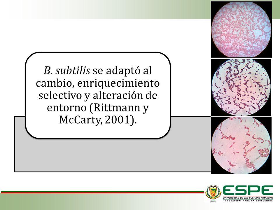 B. subtilis se adaptó al cambio, enriquecimiento selectivo y alteración de entorno (Rittmann y McCarty, 2001).