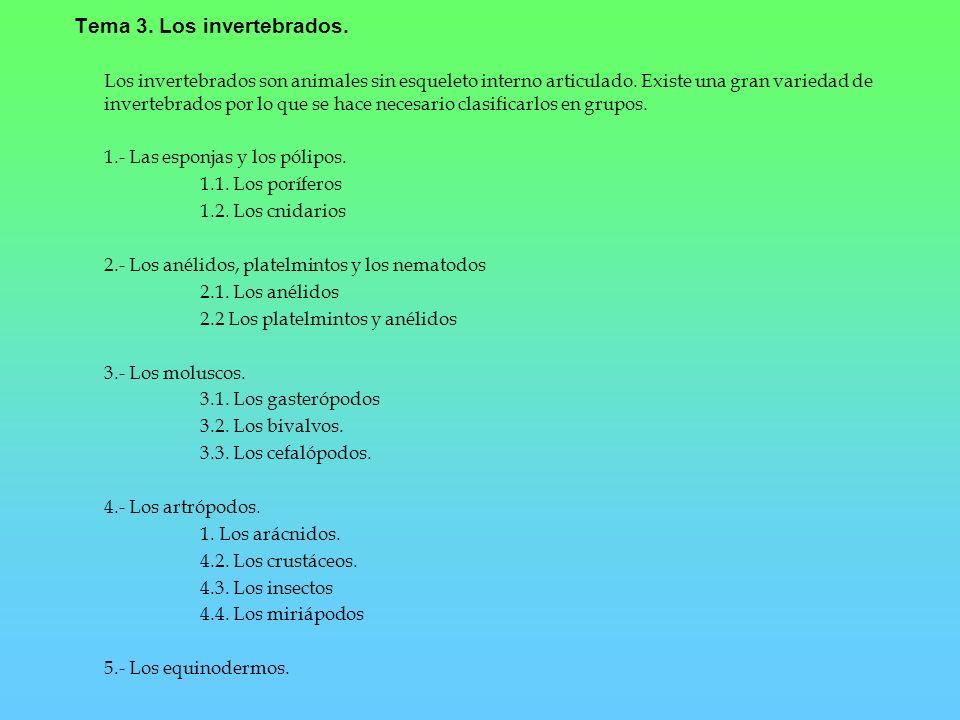 Tema 3. Los invertebrados.