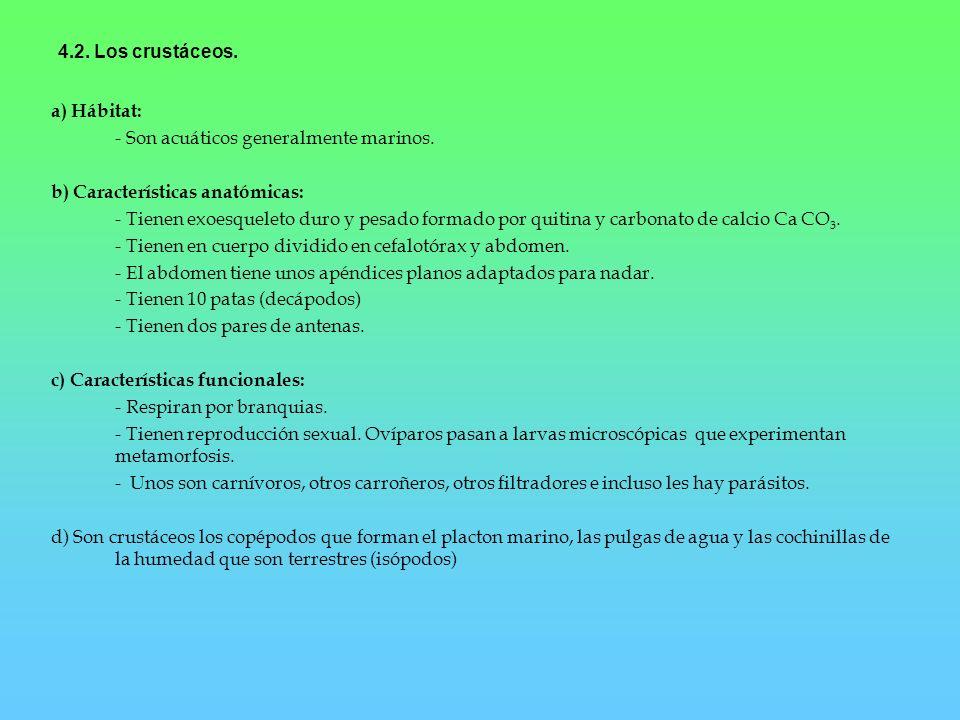 4.2. Los crustáceos. a) Hábitat: - Son acuáticos generalmente marinos. b) Características anatómicas: