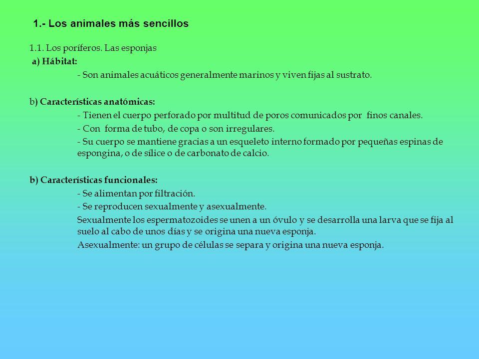 1.- Los animales más sencillos