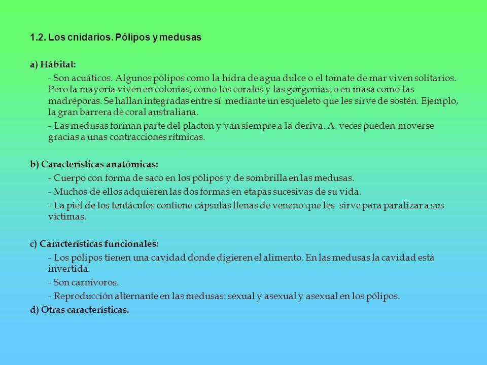 1.2. Los cnidarios. Pólipos y medusas