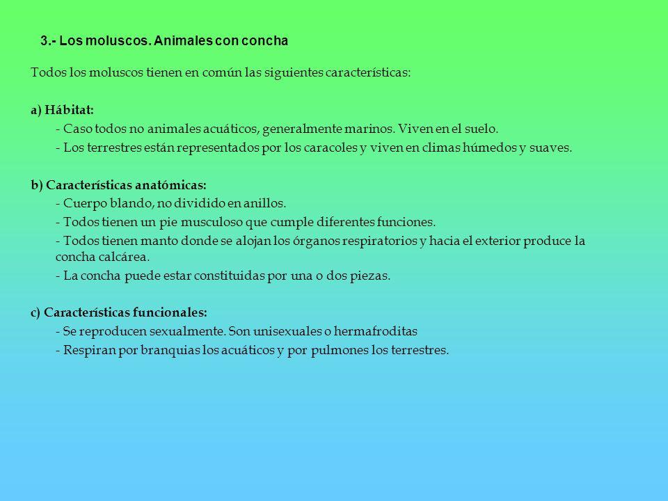 3.- Los moluscos. Animales con concha