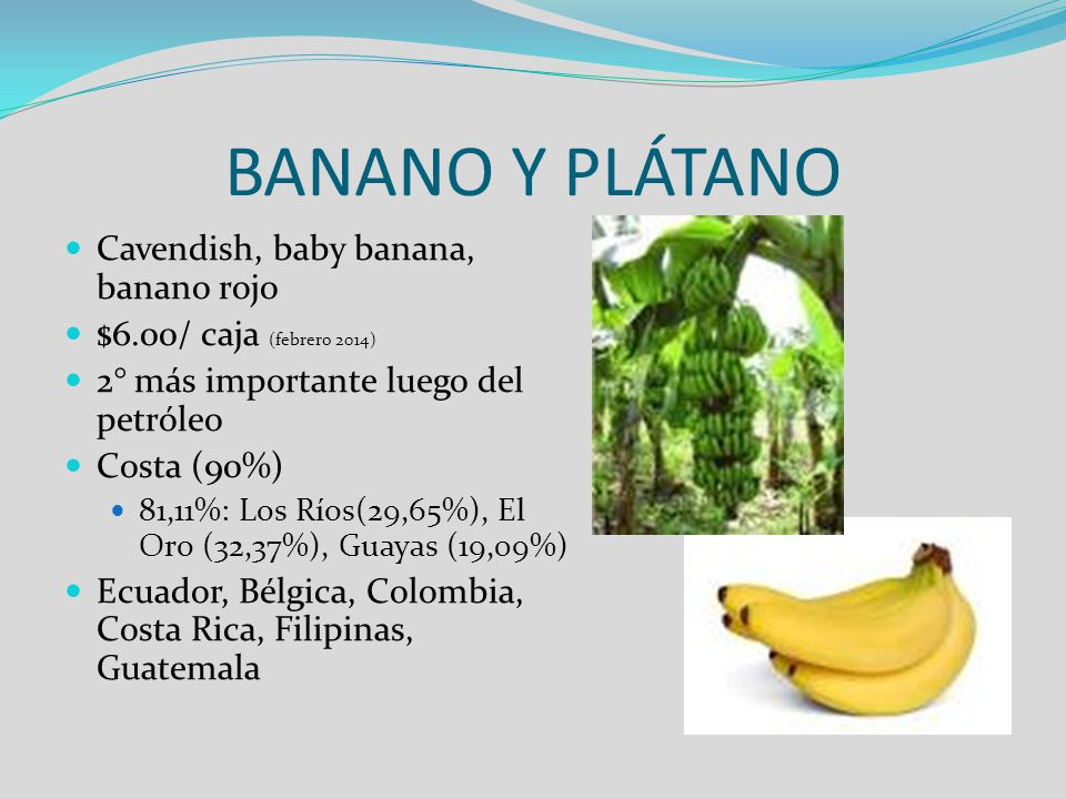 BANANO Y PLÁTANO Cavendish, baby banana, banano rojo