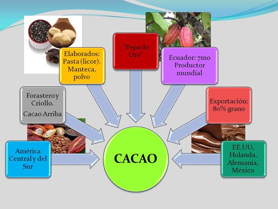 América Central y del Sur Forastero y Criollo. Cacao Arriba