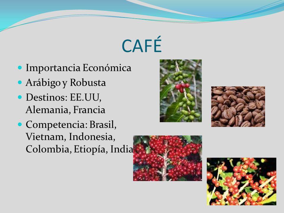 CAFÉ Importancia Económica Arábigo y Robusta