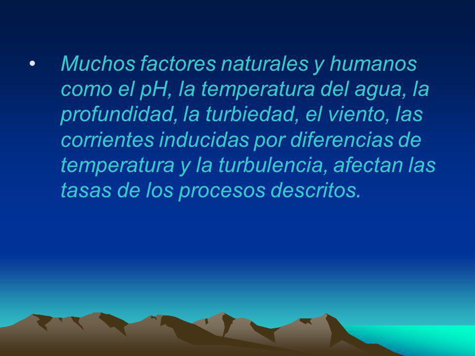 Muchos factores naturales y humanos como el pH, la temperatura del agua, la profundidad, la turbiedad, el viento, las corrientes inducidas por diferencias de temperatura y la turbulencia, afectan las tasas de los procesos descritos.