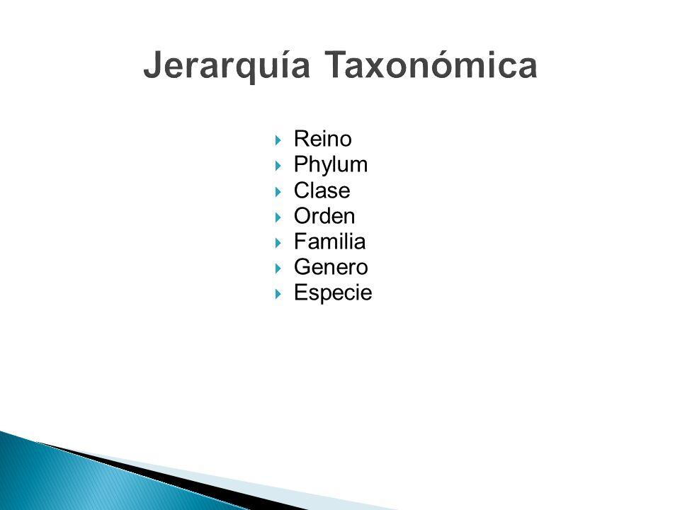 Jerarquía Taxonómica Reino Phylum Clase Orden Familia Genero Especie