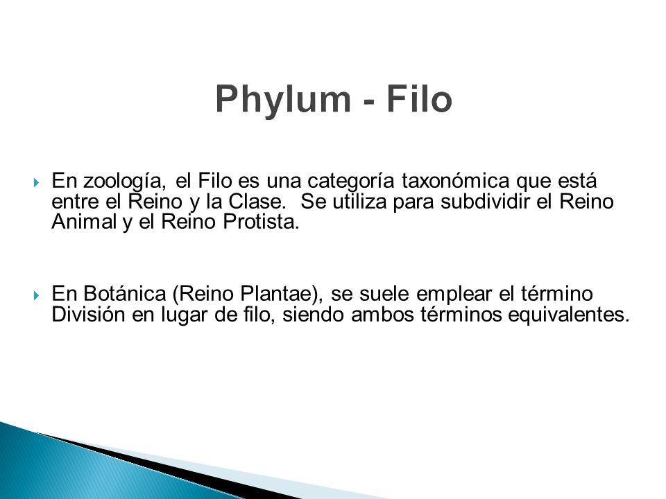 Phylum - Filo