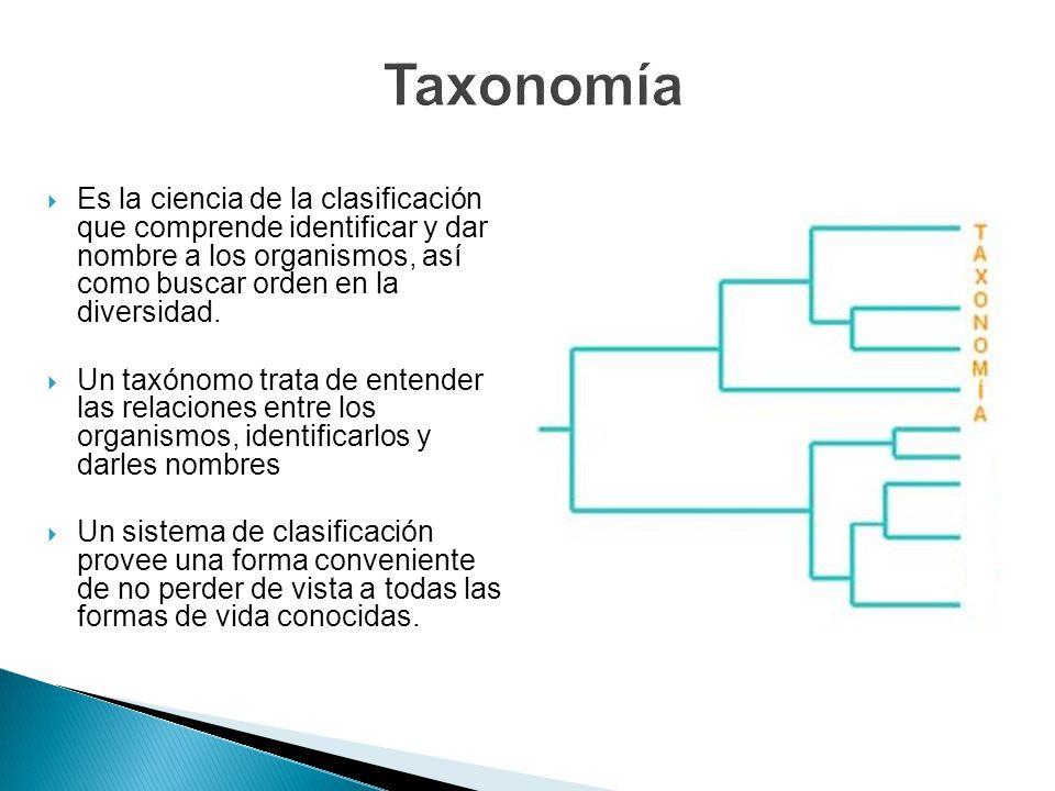 Taxonomía Es la ciencia de la clasificación que comprende identificar y dar nombre a los organismos, así como buscar orden en la diversidad.