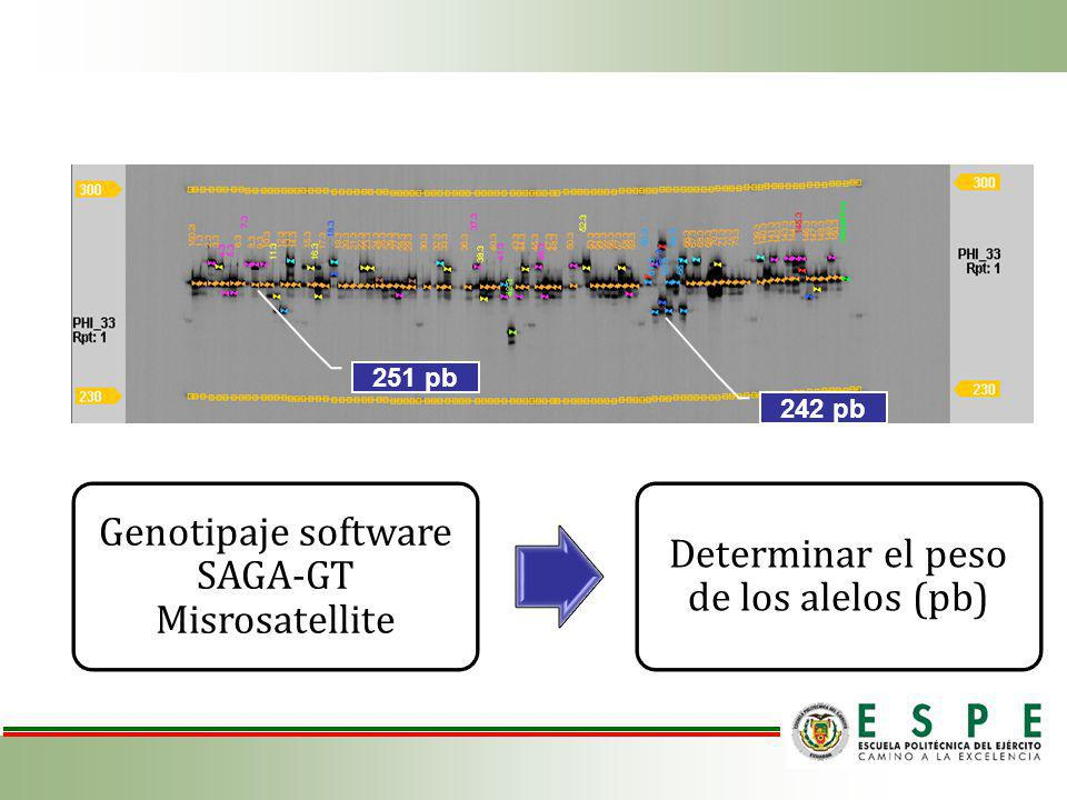 Genotipaje software SAGA-GT Misrosatellite