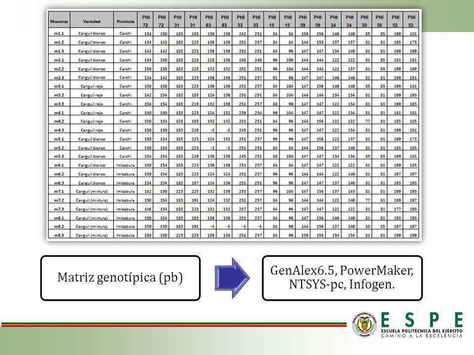 Matriz genotípica (pb) GenAlex6.5, PowerMaker, NTSYS-pc, Infogen.