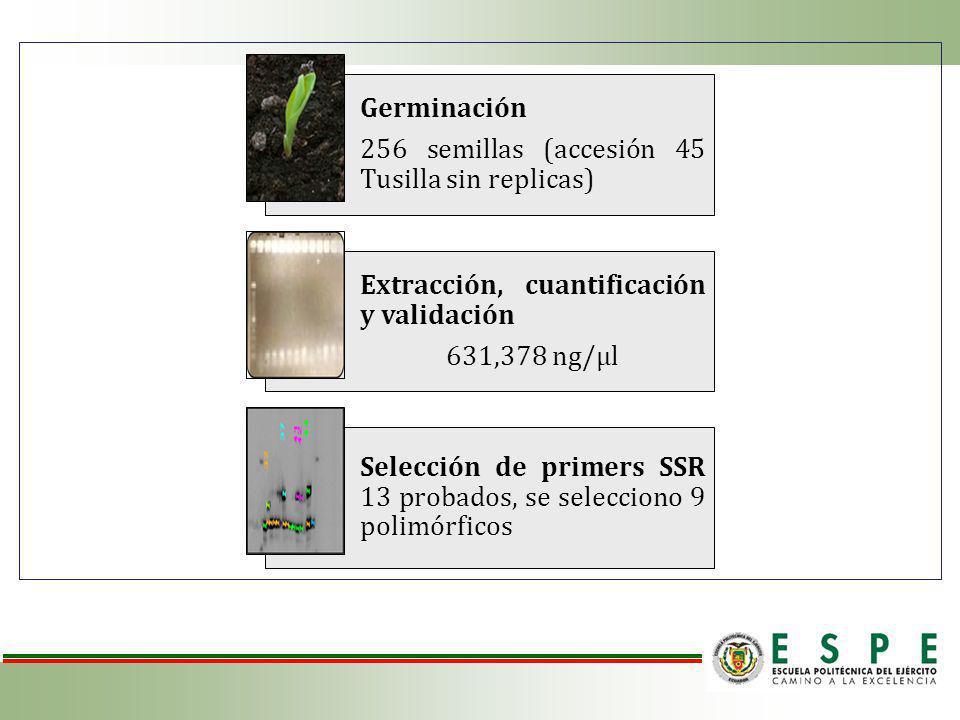 Germinación 256 semillas (accesión 45 Tusilla sin replicas) Extracción, cuantificación y validación.