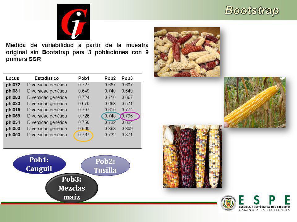 Bootstrap Pob1: Canguil Pob2: Tusilla Pob3: Mezclas maíz