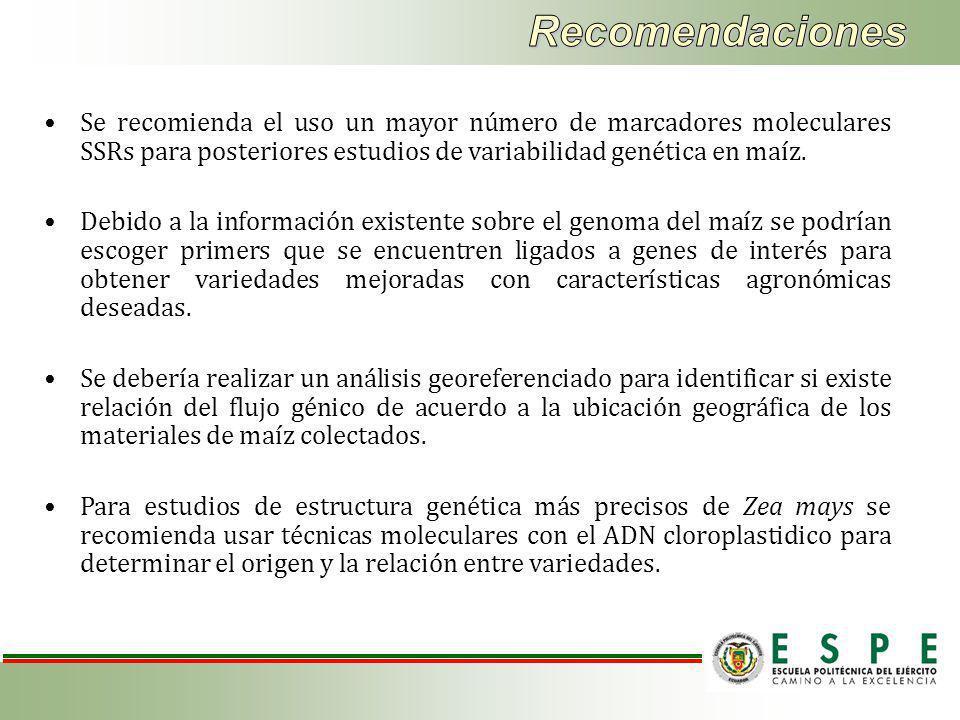 Recomendaciones Se recomienda el uso un mayor número de marcadores moleculares SSRs para posteriores estudios de variabilidad genética en maíz.