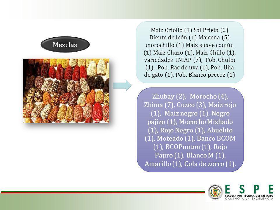 Maíz Criollo (1) Sal Prieta (2) Diente de león (1) Maicena (5) morochillo (1) Maiz suave común (1) Maiz Chazo (1), Maiz Chillo (1), variedades INIAP (7), Pob. Chulpi (1), Pob. Rac de uva (1), Pob. Uña de gato (1), Pob. Blanco precoz (1)
