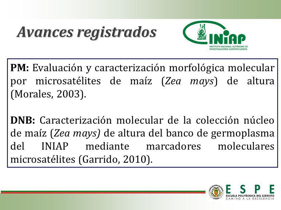 Avances registrados PM: Evaluación y caracterización morfológica molecular por microsatélites de maíz (Zea mays) de altura (Morales, 2003).