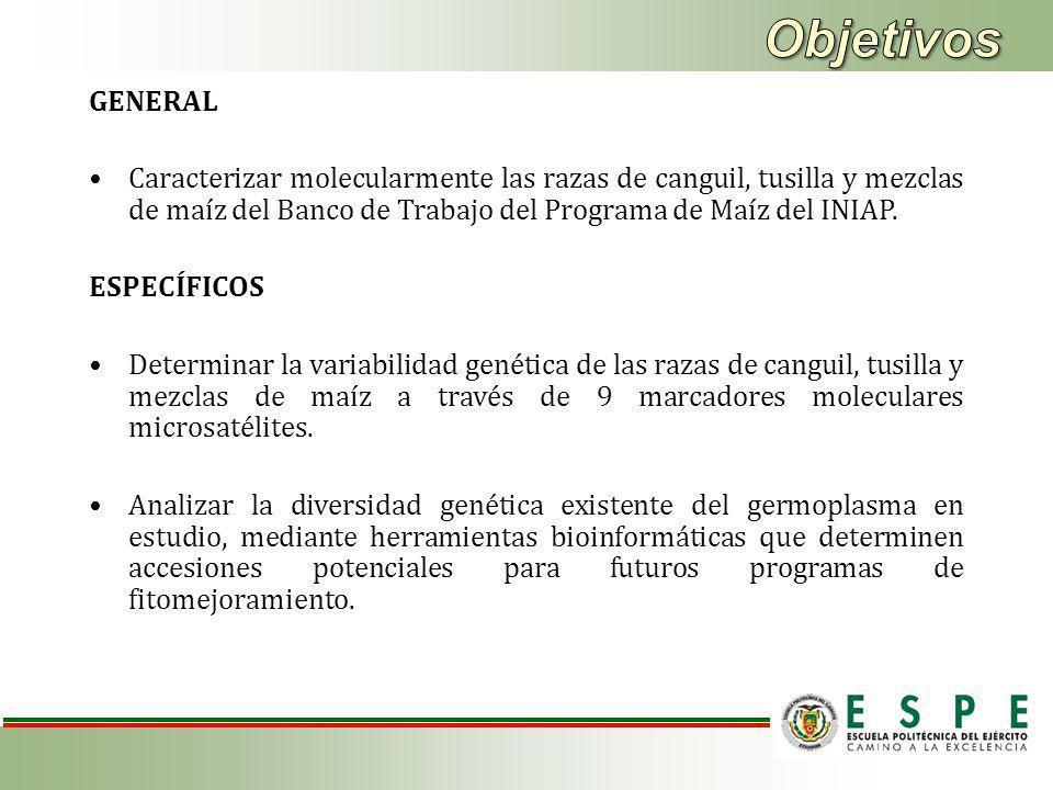 Objetivos GENERAL. Caracterizar molecularmente las razas de canguil, tusilla y mezclas de maíz del Banco de Trabajo del Programa de Maíz del INIAP.