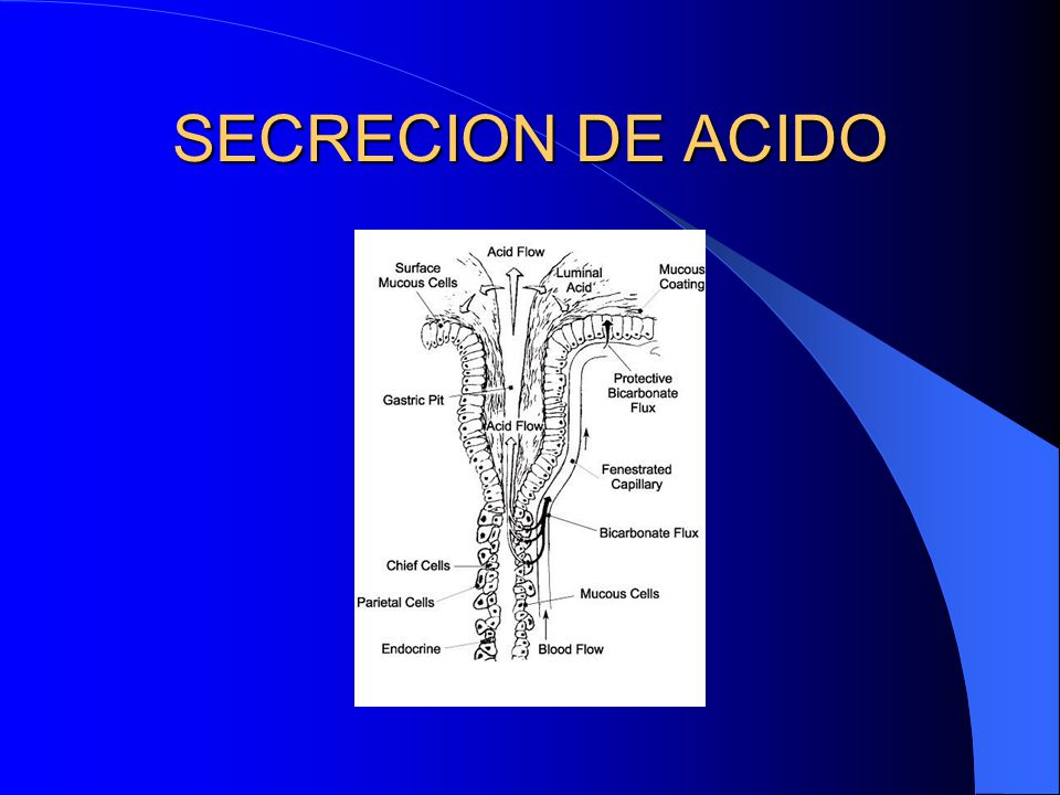 SECRECION DE ACIDO