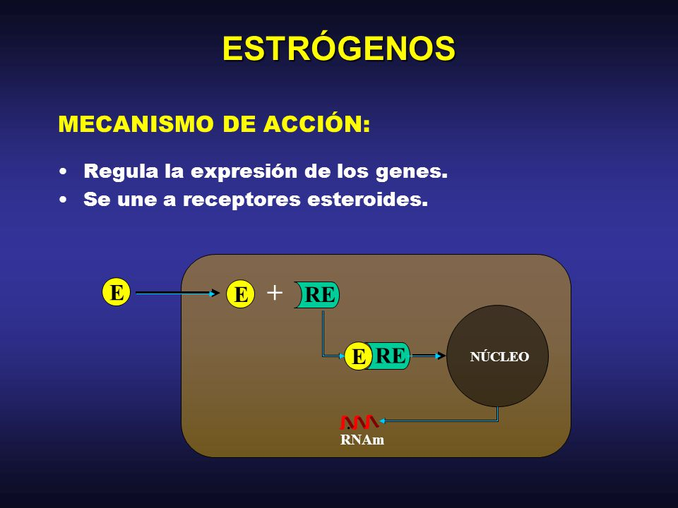 ESTRÓGENOS + MECANISMO DE ACCIÓN: E RE .