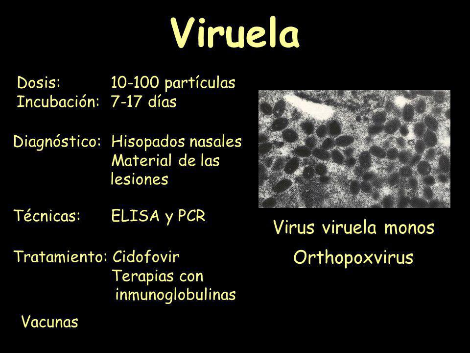 Viruela Virus viruela monos Orthopoxvirus Dosis: 10-100 partículas