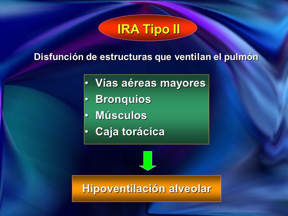 IRA Tipo II Vías aéreas mayores Bronquios Músculos Caja torácica