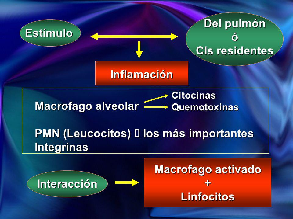 Del pulmón ó Cls residentes Macrofago activado + Linfocitos