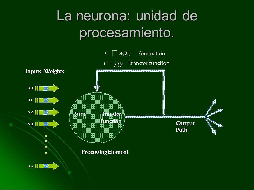 La neurona: unidad de procesamiento.