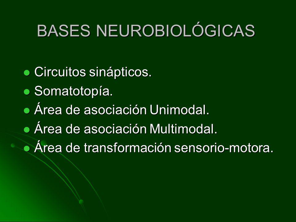 BASES NEUROBIOLÓGICAS
