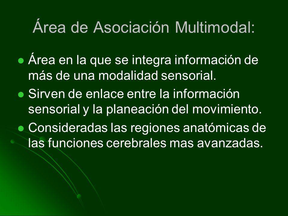 Área de Asociación Multimodal: