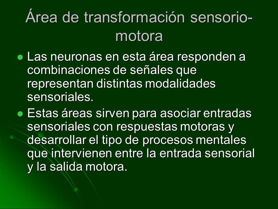 Área de transformación sensorio-motora