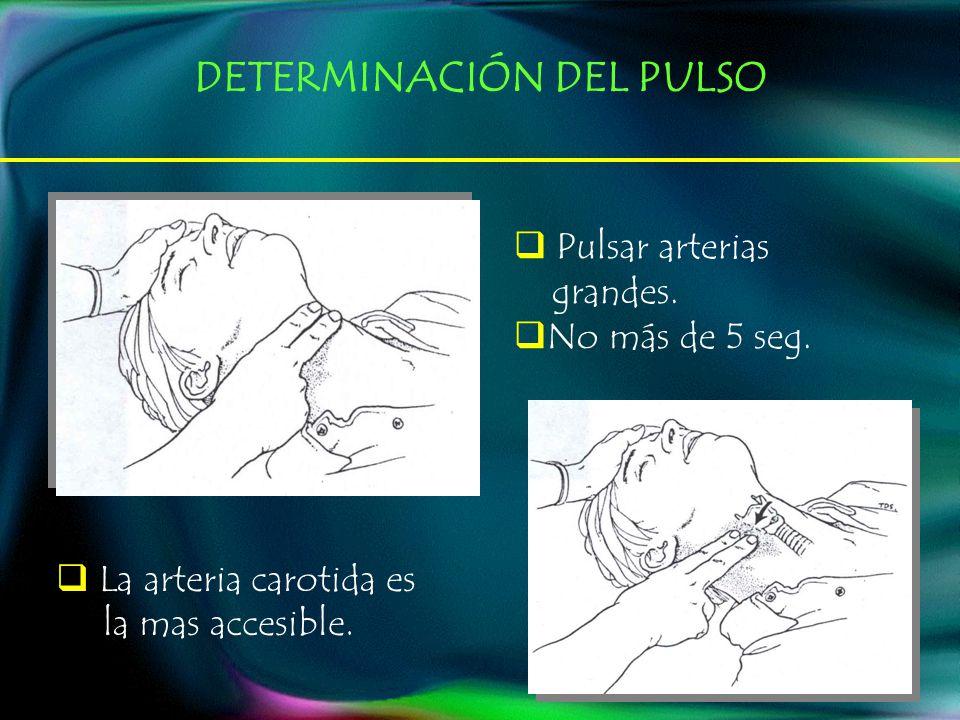 DETERMINACIÓN DEL PULSO