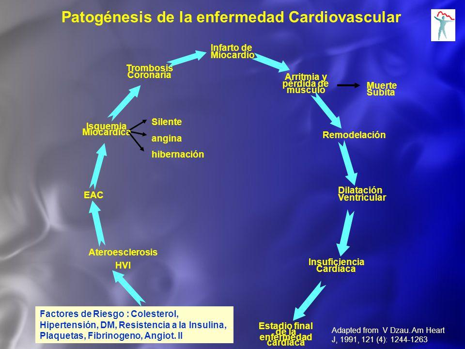 Patogénesis de la enfermedad Cardiovascular