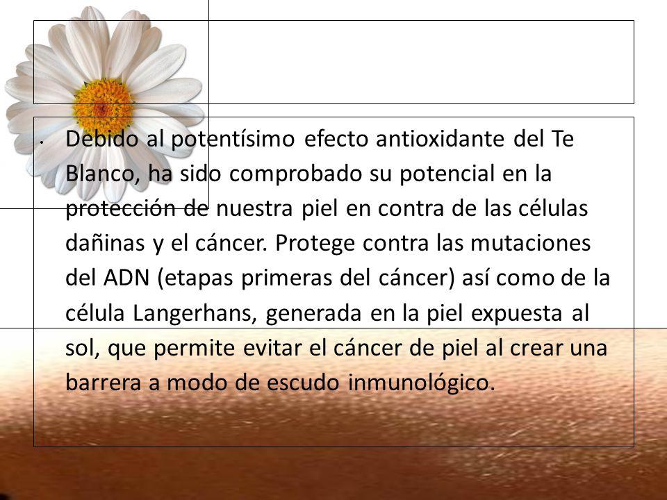 Debido al potentísimo efecto antioxidante del Te Blanco, ha sido comprobado su potencial en la protección de nuestra piel en contra de las células dañinas y el cáncer. Protege contra las mutaciones del ADN (etapas primeras del cáncer) así como de la célula Langerhans, generada en la piel expuesta al sol, que permite evitar el cáncer de piel al crear una barrera a modo de escudo inmunológico.