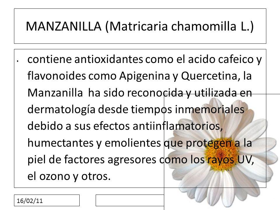 MANZANILLA (Matricaria chamomilla L.)