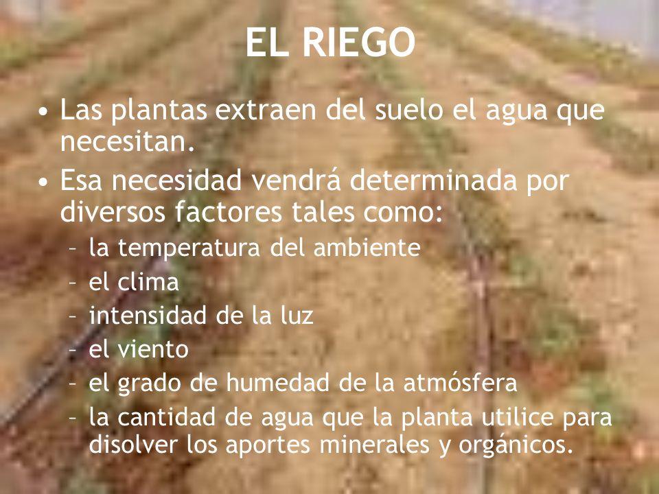 EL RIEGO Las plantas extraen del suelo el agua que necesitan.