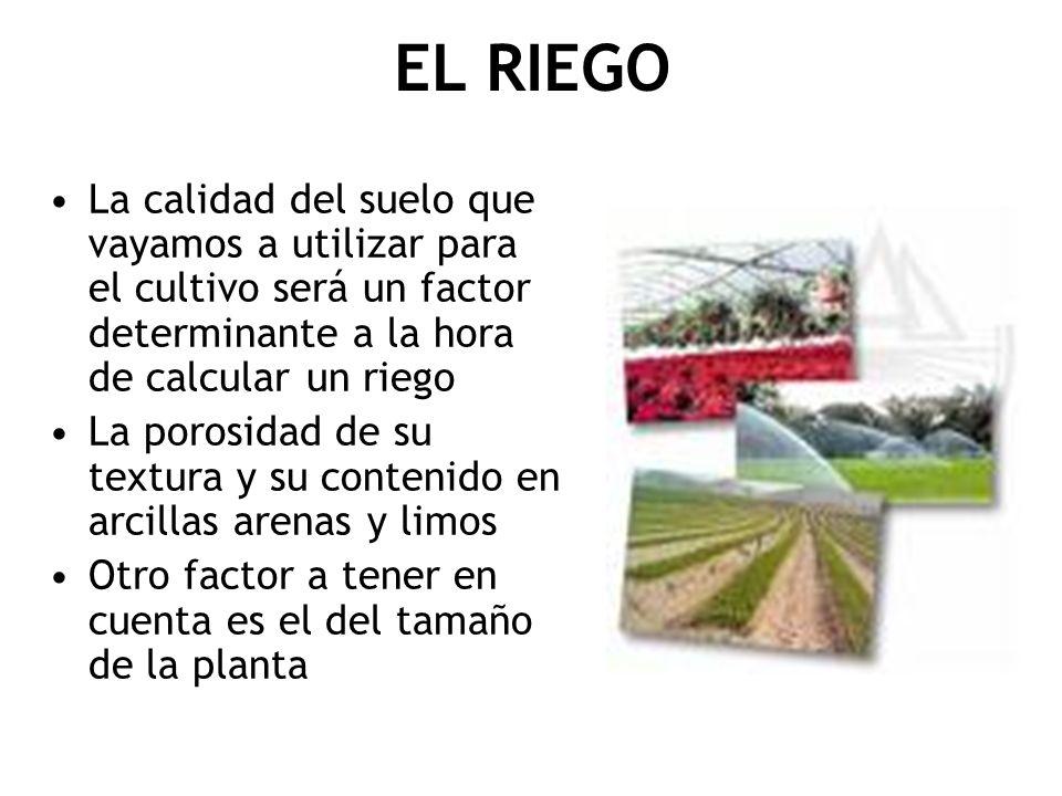 EL RIEGO La calidad del suelo que vayamos a utilizar para el cultivo será un factor determinante a la hora de calcular un riego.