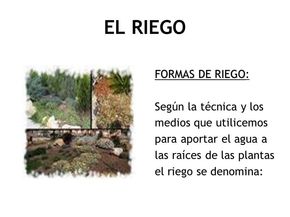 EL RIEGO FORMAS DE RIEGO: Según la técnica y los medios que utilicemos
