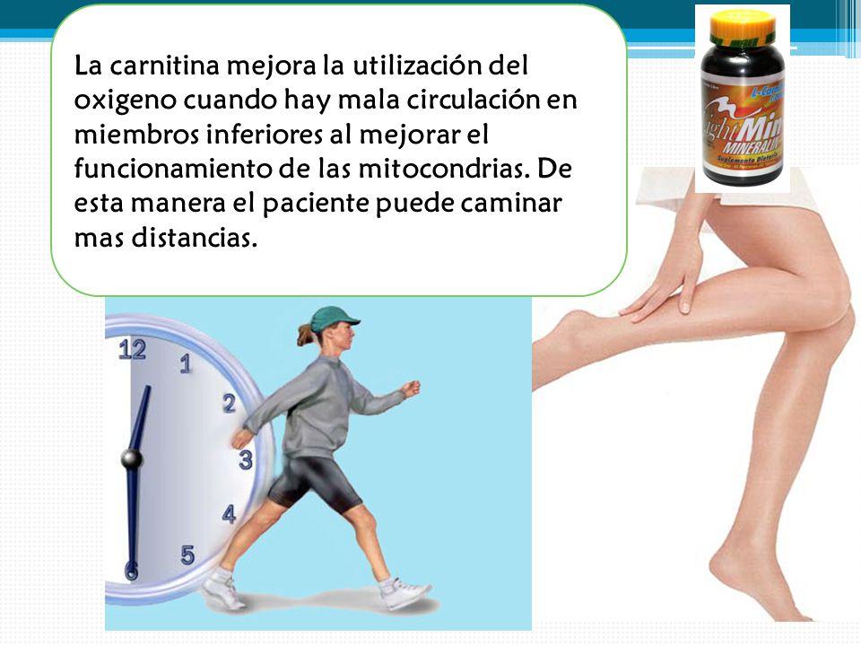 La carnitina mejora la utilización del oxigeno cuando hay mala circulación en miembros inferiores al mejorar el funcionamiento de las mitocondrias.