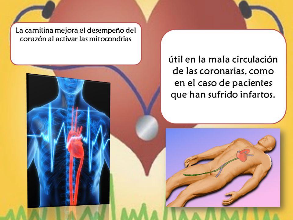 La carnitina mejora el desempeño del corazón al activar las mitocondrias