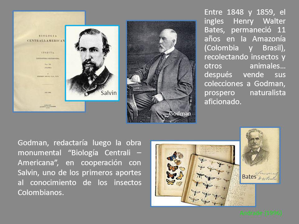 Entre 1848 y 1859, el ingles Henry Walter Bates, permaneció 11 años en la Amazonía (Colombia y Brasil), recolectando insectos y otros animales… después vende sus colecciones a Godman, prospero naturalista aficionado.